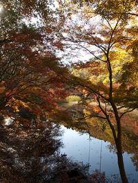 千葉市 泉自然公園の紅葉 その2 (2017/11/25) - わが愛しのXXX。