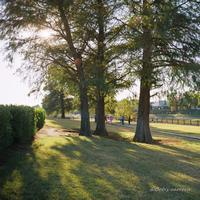 朝の散歩 - BobのCamera