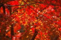 晴天紅葉満喫 - ペンタで行こう。