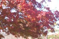秋はいずこに……(-_-;) - ケアホーム穂の香(ほのか)、ケアホームあや音(あやね)、デイサービス燈いろ(といろ)の日常