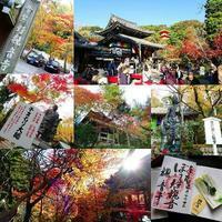 今熊野観音寺 - NATURALLY