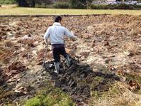 レンコン初掘り!よっちゃん来訪! - にじまる食堂 & にじまる農園