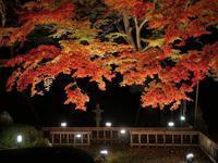 夜桜ならぬ夜もみじ♪・・・太田市・金龍寺 - 『私のデジタル写真眼』