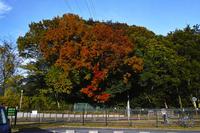 21世紀の森と広場、紅葉狩り - しゃしん三昧   ~シグマ、レクサス、着物の日々~