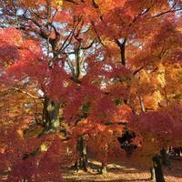 秋の京都 最後の紅葉 東福寺 - ★ Eau Claire ★ Dolce Vita ★