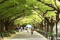✿神宮外苑 - ✿happiness✿