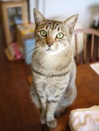 猫のお留守番 がうくん編。 - ゆきねこ猫家族