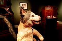 木彫りどうぶつ美術館はしもとみおの世界 - やませどうぶつ病院スタッフブログ