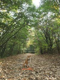 秋色グラデーション - yamatoのひとりごと
