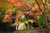 雀宮公園 - くろちゃんの写真