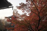 錦秋の京都2017 真如堂 - 暮らしを紡ぐ