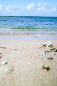 プライベートビーチはグアム随一の透明度と白く柔らかな浜辺:『ホテル・ニッコー・グアム』グアム(GUAM) - IkukoDays