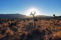 月の砂漠: Joshua Tree - パサデナ日和