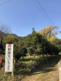 内野の大銀杏(飯塚市内野) - 今日は何処まで