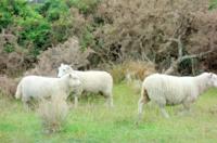 NZ:石のビーチとゴールドラッシュ - bluecheese in Hakuba & NZ:白馬とNZでの暮らし