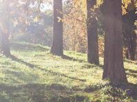 トーベヤンソンあけぼの子どもの森公園 - さて。月でも見るか。