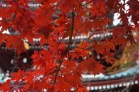 11月27日本土寺(松戸市)の紅葉 - てしやから君の撮影日記
