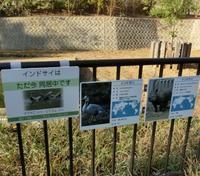 インドサイ・ナラヤニ&ター@多摩動物園 2017.11.17 - ごきげんよう 犀たち