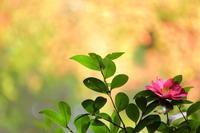 錦繍の鳳来寺山 - ecocoro日和