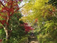 紅葉の散歩道 - AREKORE