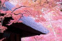 平林寺 - 花の仕事と。。日々の暮らし。。