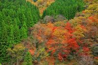 秋探し - 彩