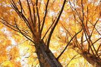真岡井頭公園 ~紅葉と鳥三昧~ - 日々の贈り物(私の宇都宮生活)
