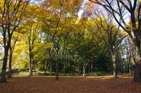 都立赤塚公園  まだまだ紅葉 - 東京雑派  TOKYO ZAPPA