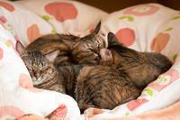 一枚に三匹 - 猫と夕焼け