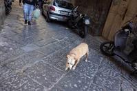 旅へ:犬に導かれて - 金色の麒麟が眺める世界