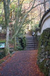 京都紅葉巡り(高山寺~神護寺) - マルオのphoto散歩