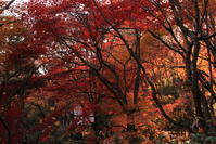 嵐山に行く6 - 写楽彩