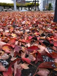 秋も終わり・・・ - Art de vivre