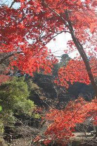 大人の遠足♪濃溝の滝や養老渓谷などバス旅で千葉県の紅葉を満喫 - neige+ 手作りのある暮らし