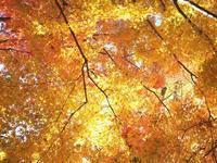 紅葉と栴檀と猫 - いつかみたソラ