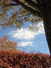 冬の街路樹は暖な色に様変わり - 活花生活(2)