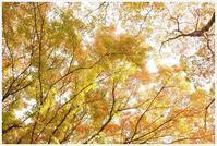 池の畔の紅葉 - my Photo blog
