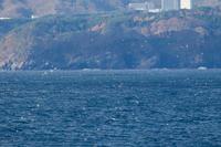 ウミネコミツユビカモメ大洗・苫小牧航路往復 - 夫婦でバードウォッチング