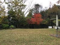 🍁 庭の紅葉 と 黄葉  Autumn Hue of My Garden - my gallery-2