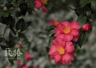 椿 - 動物園の住人たち写真展(はなけもの写眞館)