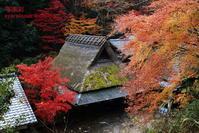 嵐山に行く8 - 写楽彩
