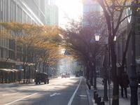 博多の朝散歩 - 柳に雪折れなし!Ⅱ