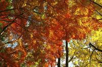 ②21世紀の森と広場、紅葉狩り - しゃしん三昧   ~シグマ、レクサス、着物の日々~