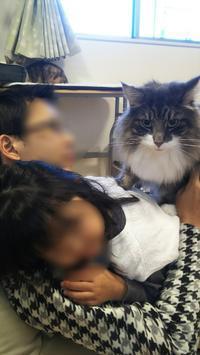 モテ男 - 猫に目薬