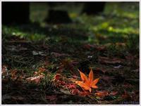 雨後の平林寺・紅葉-4161) - 趣味の写真 ~OLYMPUS E-M1MarkⅡ、PenF~
