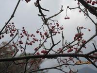 赤い実 - 宮迫の! ようこそヤマボウシの森へ