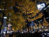 大阪御堂筋のイチョウ並木 - 神戸トピックス
