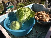 きょうもレンコン掘り。明日のマルシェの準備。せんしょー来訪。 - にじまる食堂 & にじまる農園