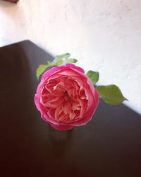 *本日2017_12_2は〜 - salon de thé okashinaohana 可笑的花