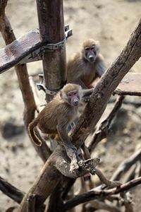 雨が降り止んだらウォーキングサファリ - 動物園放浪記